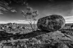 Rocha e árvore Foto de Stock