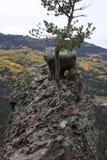 Rocha e árvore para fora em uma borda Fotografia de Stock