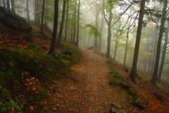 A rocha e as pedras, musgo e faias, floresta, névoa, estrada, árvores, folhas, uma rota da floresta, outono, trajeto imagens de stock