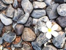 Rocha e flor Imagem de Stock Royalty Free