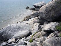 Rocha e planta na praia Fotos de Stock
