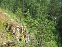 Rocha entre as árvores Fotografia de Stock
