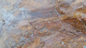 Rocha estranha de madeira de Petrifled bonita foto de stock royalty free