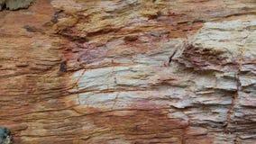 Rocha estranha de madeira de Petrifled bonita imagens de stock royalty free