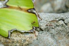 Rocha, folha e uma formiga imagens de stock