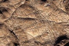 Rocha fossilizada Fotos de Stock