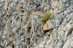 Rocha litoral, fim acima Fotos de Stock Royalty Free