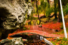 Rocha na floresta Imagem de Stock