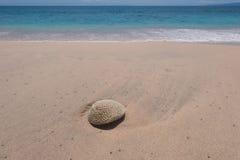 Rocha na praia Imagens de Stock