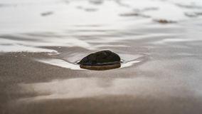 Rocha pequena na areia foto de stock