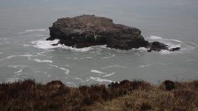 Rocha Portreath Cornualha norte Inglaterra Reino Unido da gaivota filme
