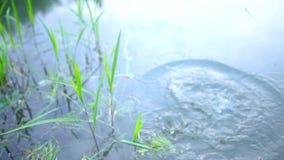 Rocha que está sendo jogada em um lago filme