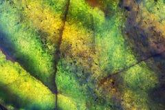 Rocha verde colorida e iluminada da jadeíte Imagem de Stock