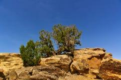 Rochas amarelas no deserto com os arbustos curvados pequenos que crescem sobre eles na frente do céu azul Imagem de Stock