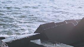 Rochas da água Rochas na água Quebra-mares na costa do oceano Ondas causando um crash filme