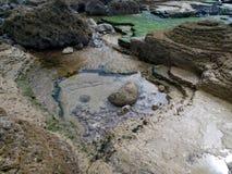 Rochas da alga Fotos de Stock Royalty Free