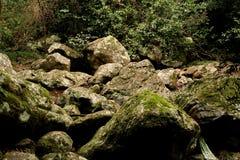 Rochas da floresta húmida Foto de Stock