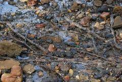 Rochas da praia de Nudgee, raizes da árvore e raizes dos manguezais Fotografia de Stock Royalty Free