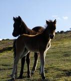 Rochas de Haytor & p?neis de Dartmoor Imagem de Stock Royalty Free