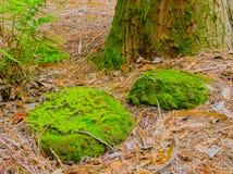 Rochas de HDR, tronco de árvore & samambaias Fotos de Stock