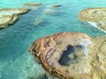 Rochas de Stromatolitos Fotos de Stock