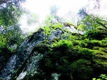 Rochas de Ural na floresta Fotografia de Stock