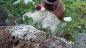 Rochas do jardim Foto de Stock Royalty Free