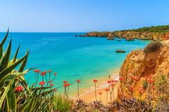 Rochas do penhasco na praia bonita Foto de Stock