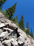 Rochas e árvores Fotografia de Stock Royalty Free