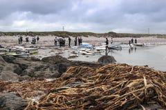 Rochas e alga dos Windsurfers imagem de stock