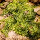 Rochas e algas em Waterville, Kerry do condado - efeito do vintage Imagens de Stock Royalty Free