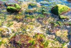 Rochas e algas verdes sob a água foto de stock royalty free