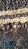 Rochas e concha do mar Imagens de Stock Royalty Free