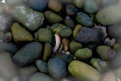 Rochas e escudos e restos minúsculos da vida do rio imagens de stock