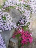 Rochas e flores Fotos de Stock Royalty Free