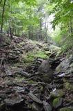 Rochas e floresta Imagens de Stock