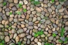 Rochas e folha no jardim Imagens de Stock
