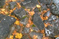Rochas e folhas Imagem de Stock
