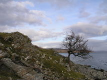 Rochas e ilha da árvore de Skye imagens de stock