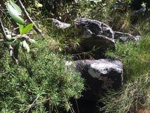 Rochas e plantas Fotografia de Stock Royalty Free