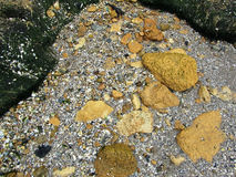 Rochas e seixos na praia imagens de stock