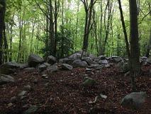 Rochas em uma floresta da faia Fotografia de Stock Royalty Free