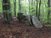 Rochas em uma floresta da faia Imagem de Stock Royalty Free
