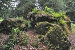 Rochas grandes do musgo da floresta com samambaia fotografia de stock