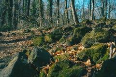 Rochas musgosos e folhas de outono na terra fotos de stock