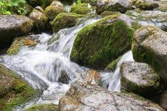 Rochas musgosos molhadas em The Creek Fotografia de Stock Royalty Free