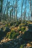 Rochas musgosos na terra imagens de stock