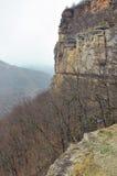 Rochas na floresta de fevereiro Imagem de Stock