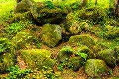 Rochas na floresta do pinho Fotografia de Stock Royalty Free