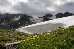Rochas, neve e flor. Foto de Stock Royalty Free
